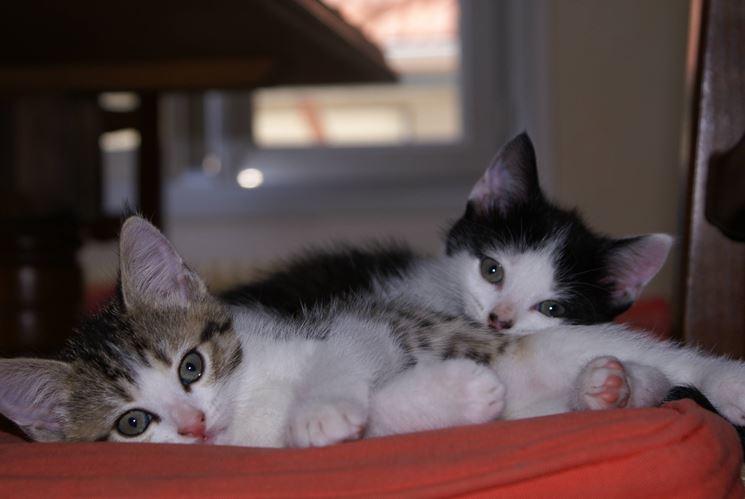 Dei gattini domestici, ambientati tra le mura di casa.