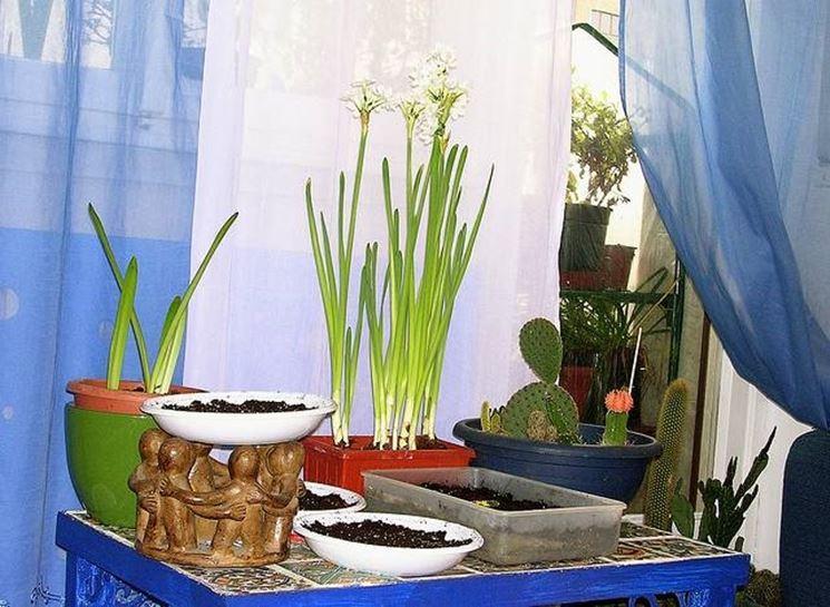 Verde in casa il bricolage realizzare un angolo verde in casa - Bricolage fai da te casa ...