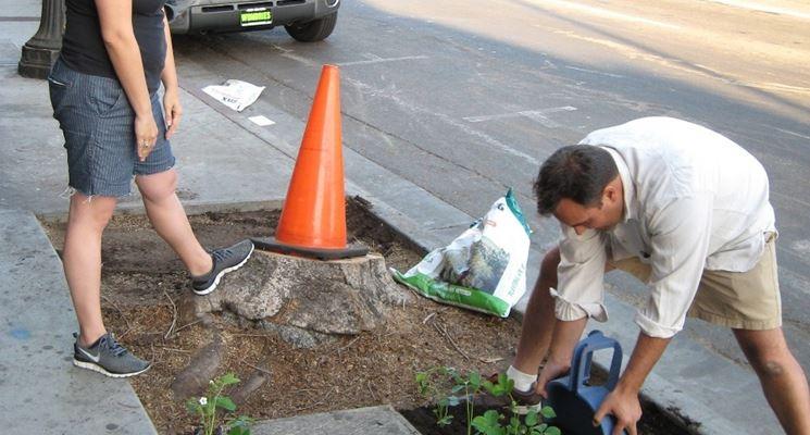 Azione di guerrilla gardening
