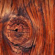 castagno legno