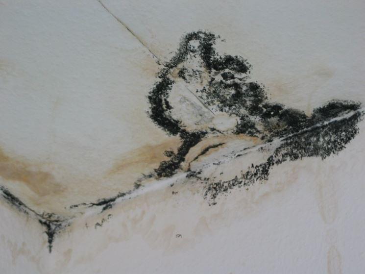 Muffa nera nei muri delle case