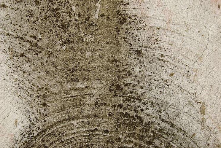 Muro infestato di muffa