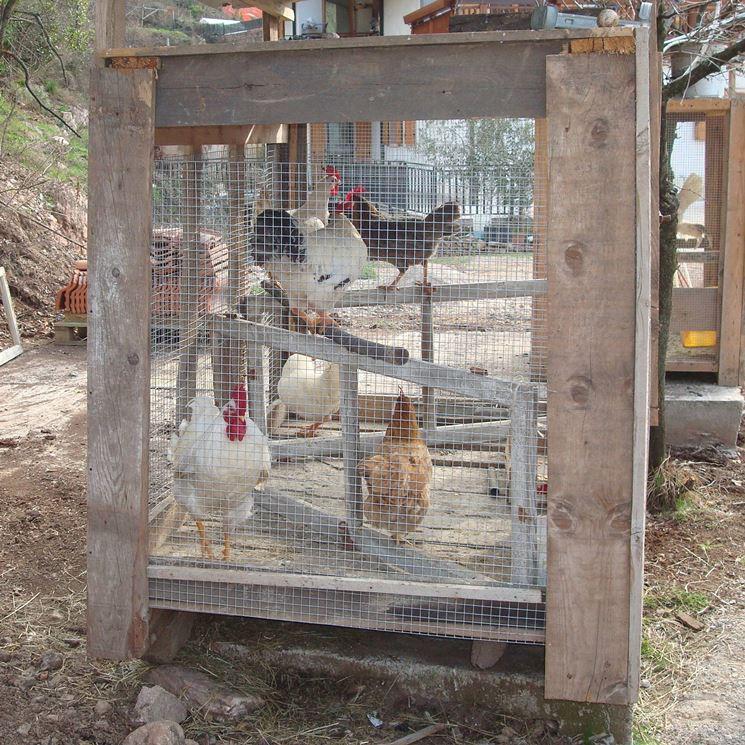 Recinto per galline Spazioso, Pulito e Sicuro