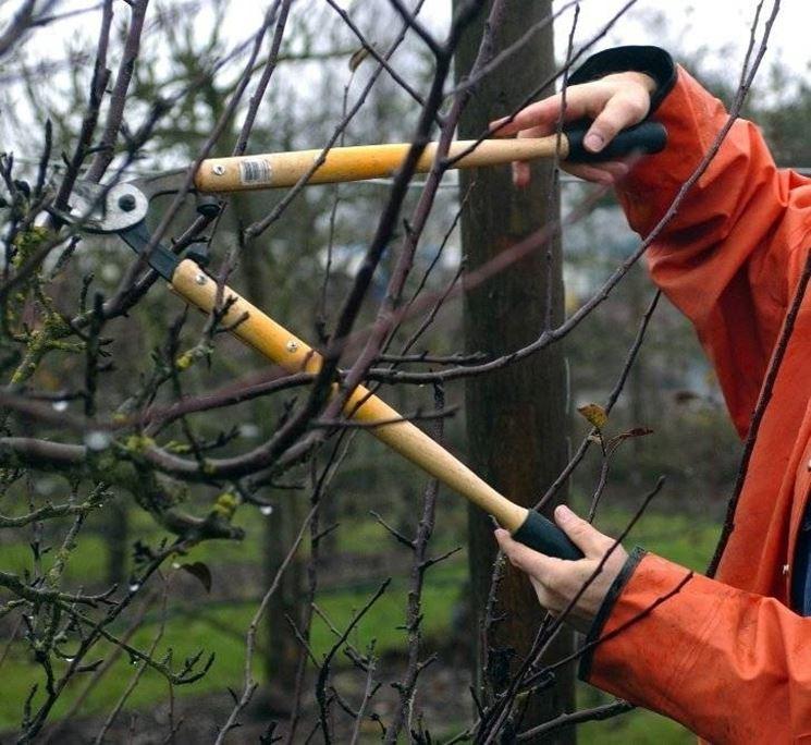 Come fare la potatura alberi da frutto come potare for Potatura alberi da frutto