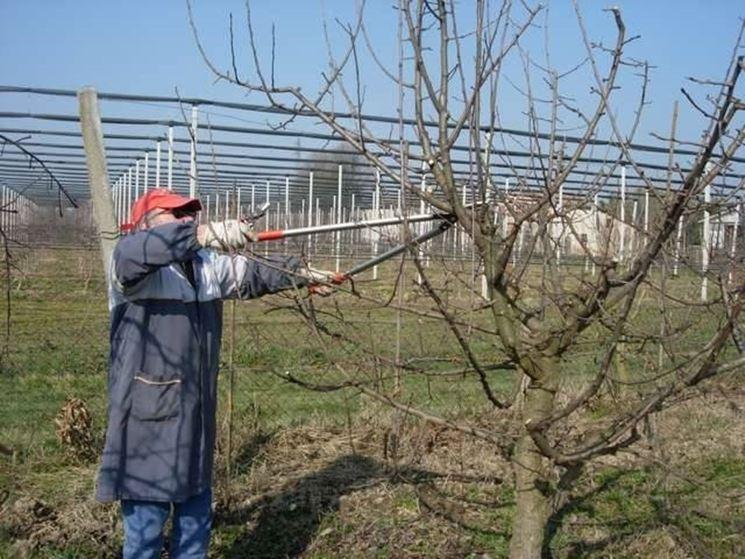 Come fare la potatura alberi da frutto come potare - Alberi frutto giardino ...
