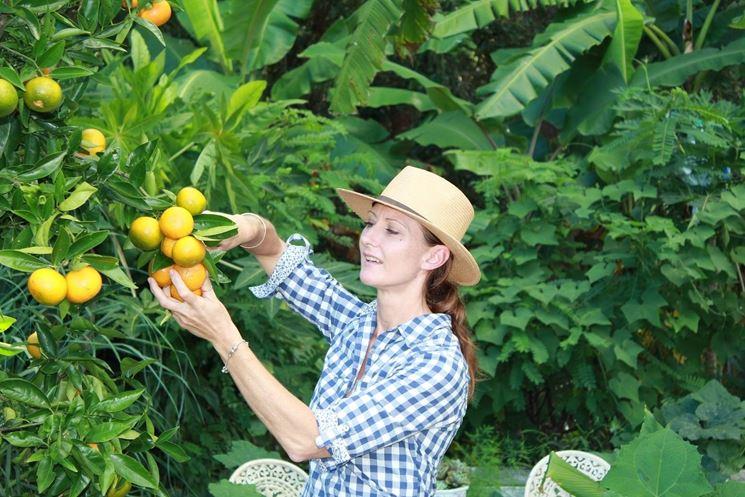 Come Potare Le Piante : Come potare il limone consigli per