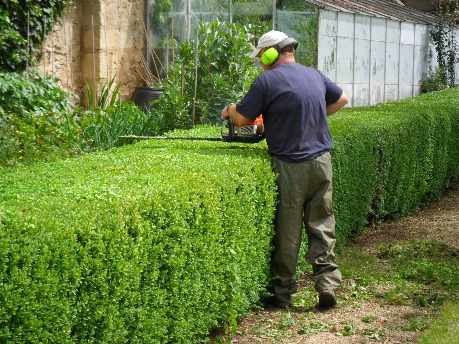 Tipologie di potatura alberi: quali alberi bisogna potare e quando