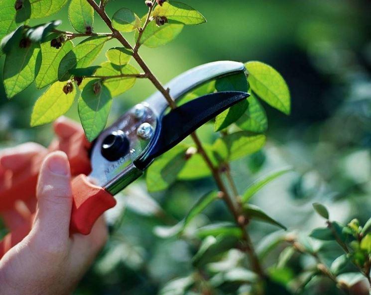 Tipologie di potatura piante - Come Potare - Come potare le piante verdi da a...