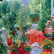 Coltivare in terrazzo