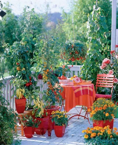Coltivare in terrazzo - Fare Giardinaggio - Coltivare in terrazzo: consigli s...