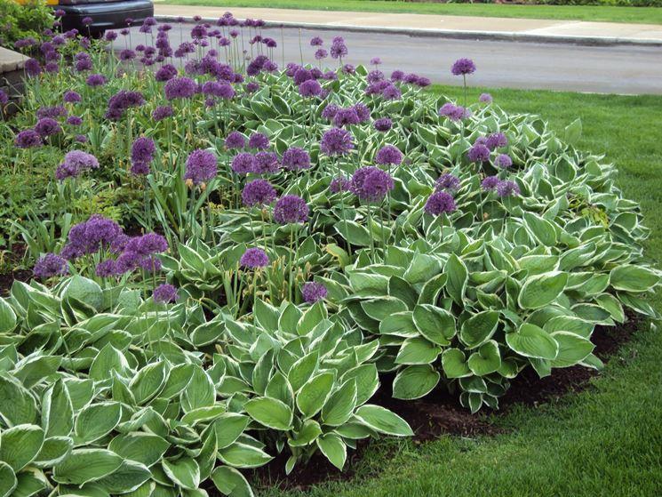Fiori da giardino perenni - Fare Giardinaggio - Fiori perenni