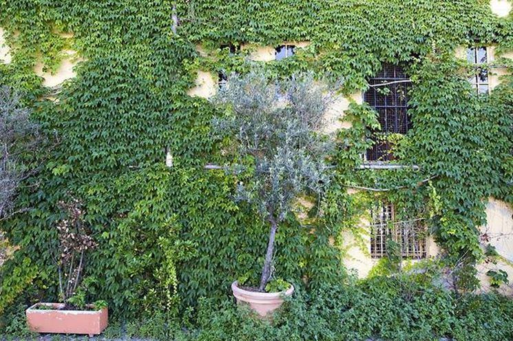 Giardino fai da te fare giardinaggio come realizzare for Case ricoperte di edera
