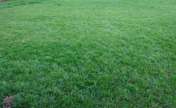 manto verde