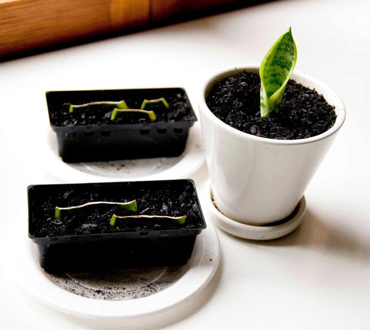 propagazione piante