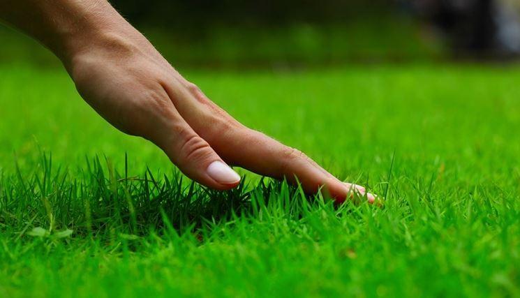 fertilizzare il prato