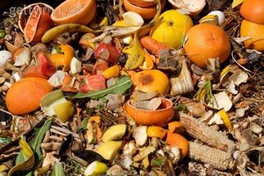 Materia organica per il compost