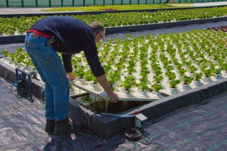 Esempio di coltivazione idroponica<p />Esempio di coltivazione idroponica<p />Esempio di coltivazione idroponica