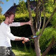 È bene potare gli alberi