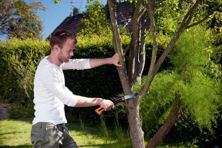 � bene potare gli alberi