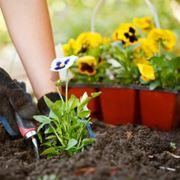 Semina del giardino