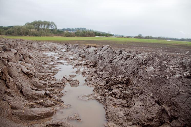 Ristagno idrico su terreno argilloso