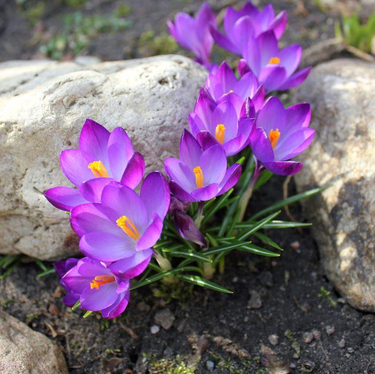 Fiori Di Primavera.I Piu Bei Fiori Di Primavera Fiori In Giardino I Fiori Piu