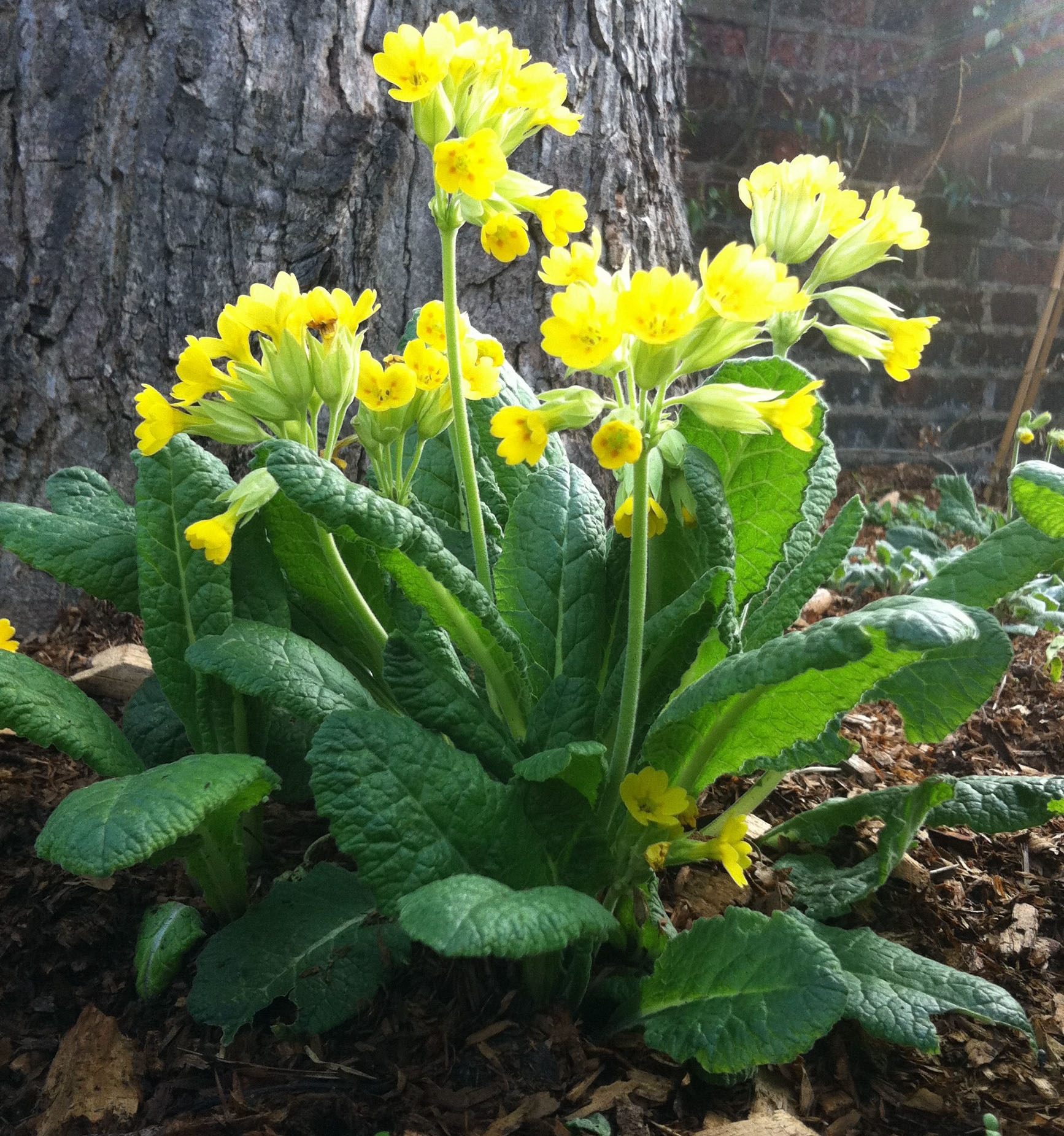 I più bei fiori di primavera - Fiori in giardino - I fiori più belli di prima...