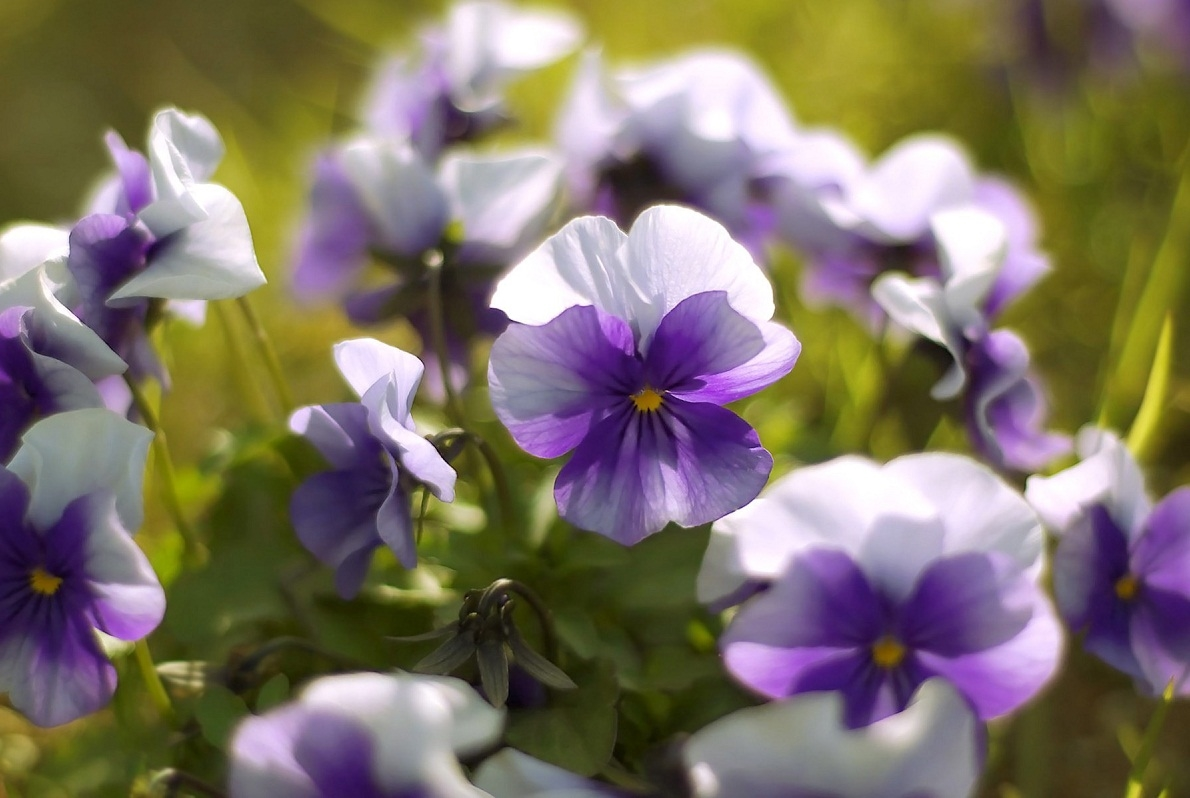 I pi bei fiori di primavera fiori in giardino i fiori - Fiori di giardino ...