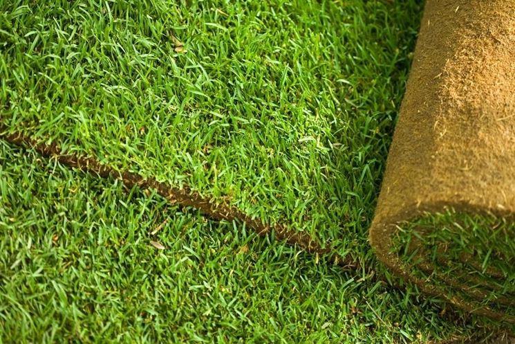 Rotoli d'erba pronti ad essere srotolati