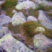 Un particolare di un giardino roccioso