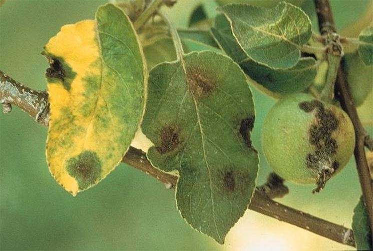danni foglie