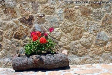 Coltivazione del geranio. Fonte: www.siciliaparchi.com.