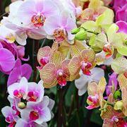 Malattie delle orchidee
