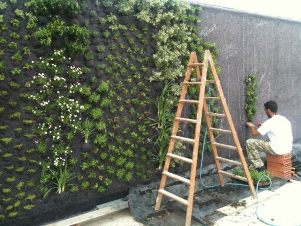 Come realizzare pareti vegetali quale giardino ecco come realizzare pareti vegetali - Come realizzare un giardino verticale ...