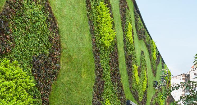 Giardino verticale fai da te quale giardino come costruire un giardino verticale fai da te - Come realizzare un giardino verticale ...
