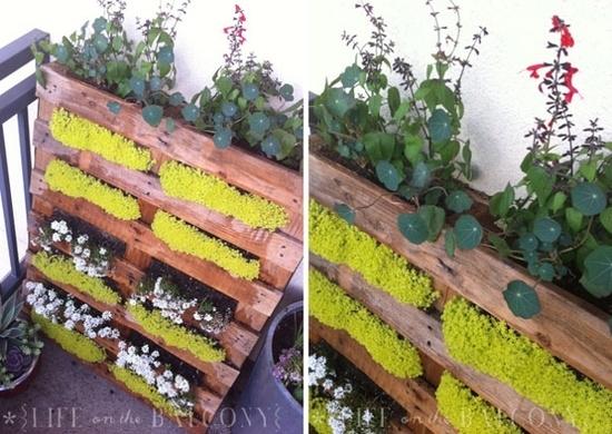 Giardino verticale fai da te quale giardino come for Decorazione giardino fai da te