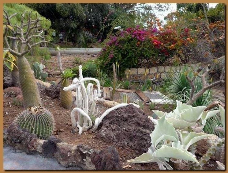 Composizione piante grasse giardino io65 regardsdefemmes for Aiuole giardino con sassi