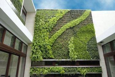 architettura piante parete