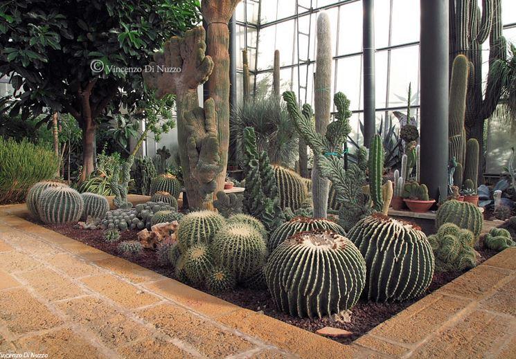 Caratteristiche delle serre per piante grasse serre da for Piante grasse in giardino