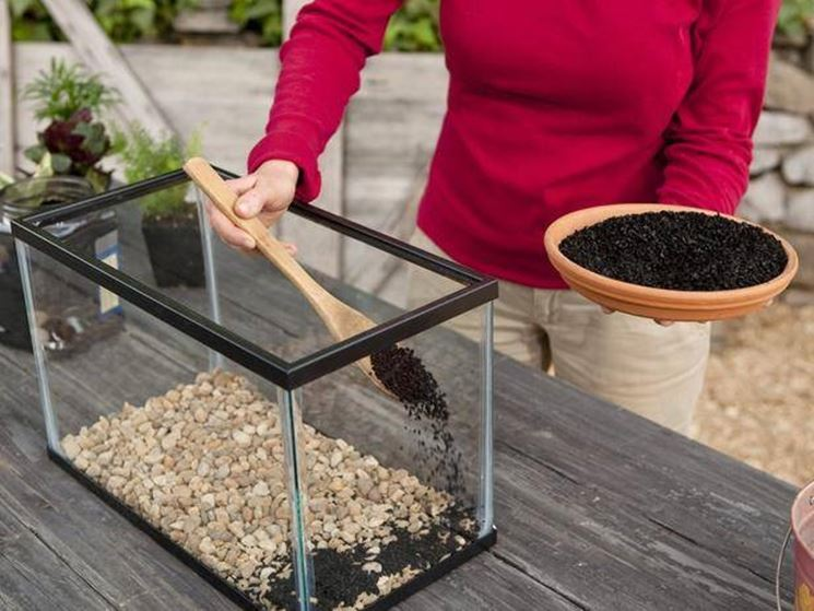 creare un terrario
