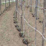 Impianto di irrigazione tipico