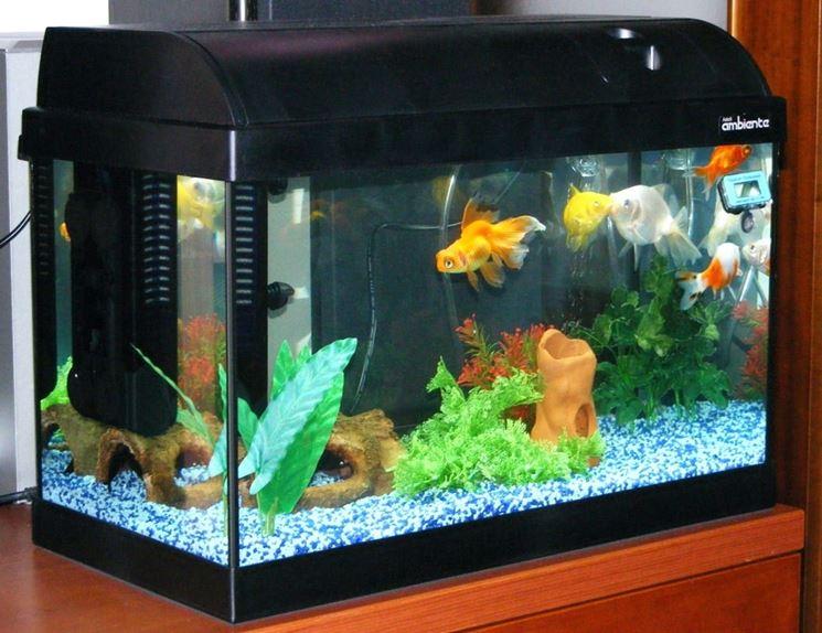 Acquario in casa accessori per la casa realizzare un for Filtro vasca pesci rossi