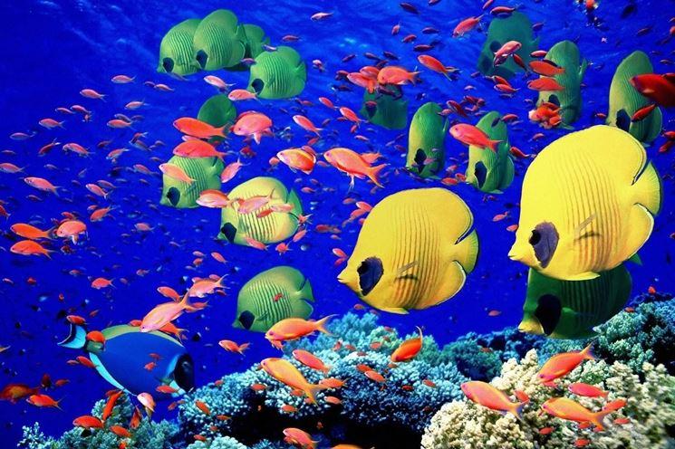 Pesci tropicali da acquario
