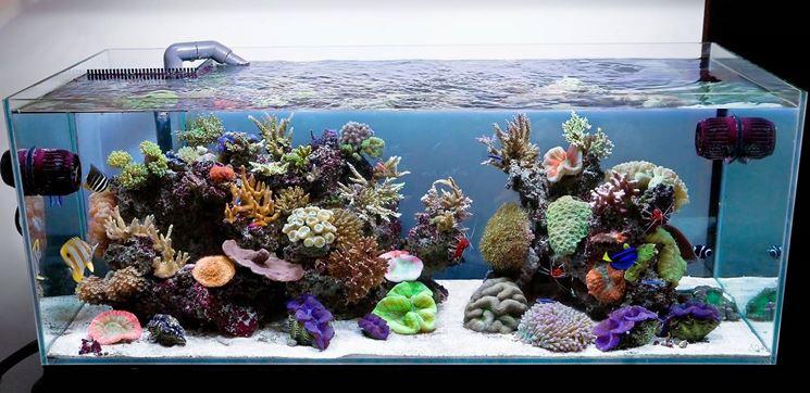 acquario1