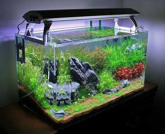 Allestimento di un acquario - Accessori per la casa - Allestimento di ...