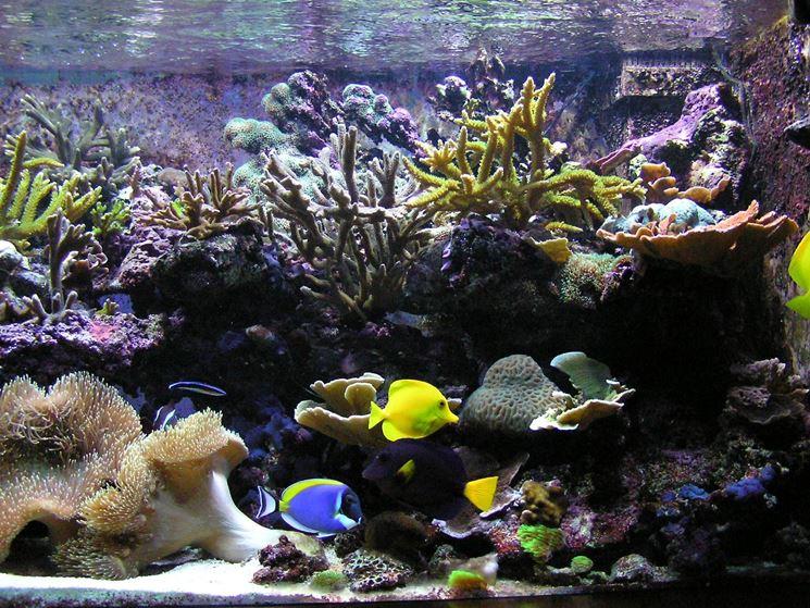 Interno acquario