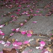 Pavimentazione di un giardino in pietra