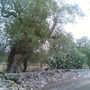 Muro ecologico a secco