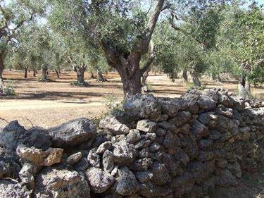 Dettaglio muro ecologico