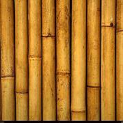 Il bamboo: un legno acquatico che si presta a molti usi
